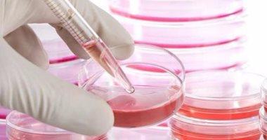 باحثة تعرض تقنية جديدة لعلاج السكر بخلايا البنكرياس