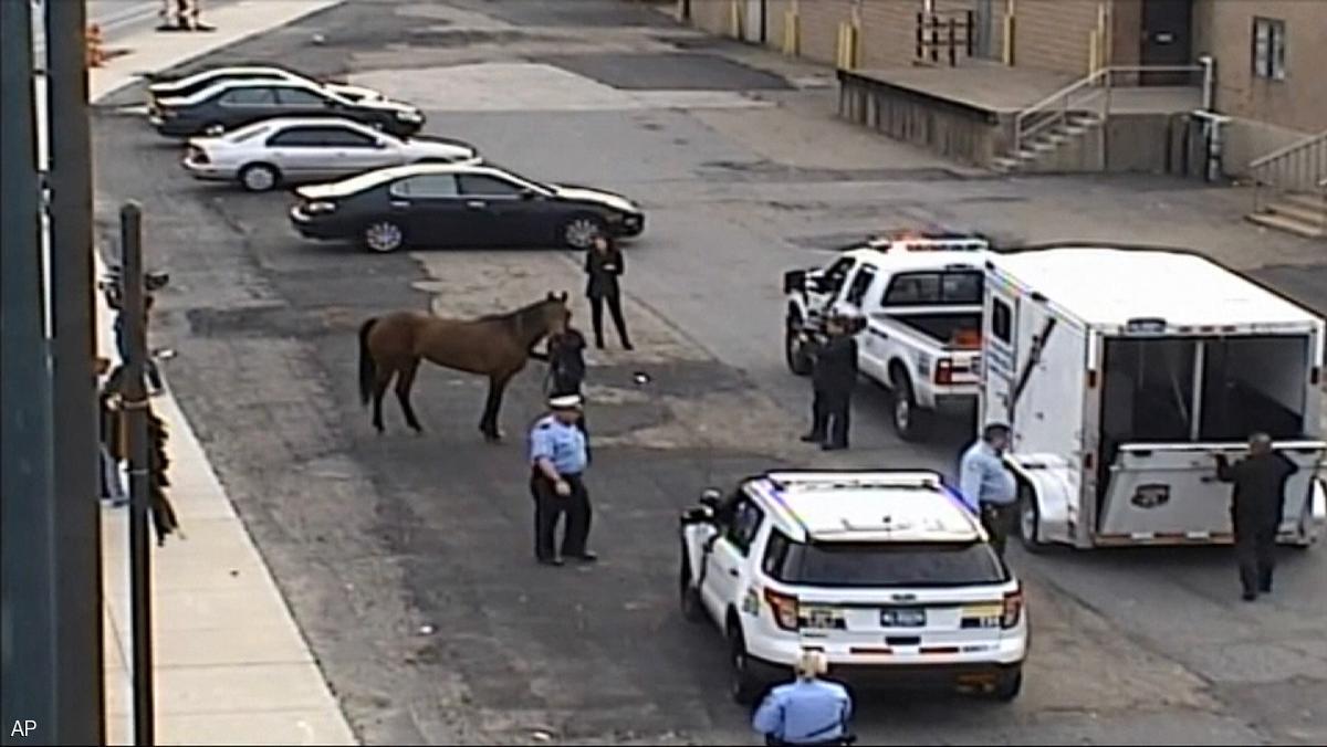 الشرطة الأميركية تستعيد هاربا بسلاح الجزر