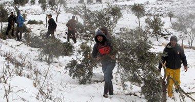اقتلاع 310 شجرات زيتون معمرة في قرية بضواحي القدس
