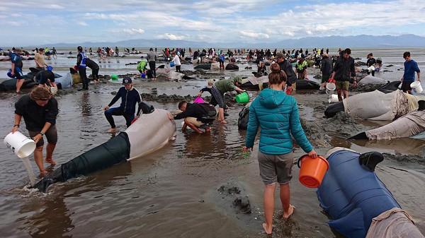 انتحار عشرات الدلافين على سواحل الأرجنتين