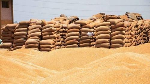 الزراعة تعلن أسعار طن الحنطة المسوقة للموسم الحالي