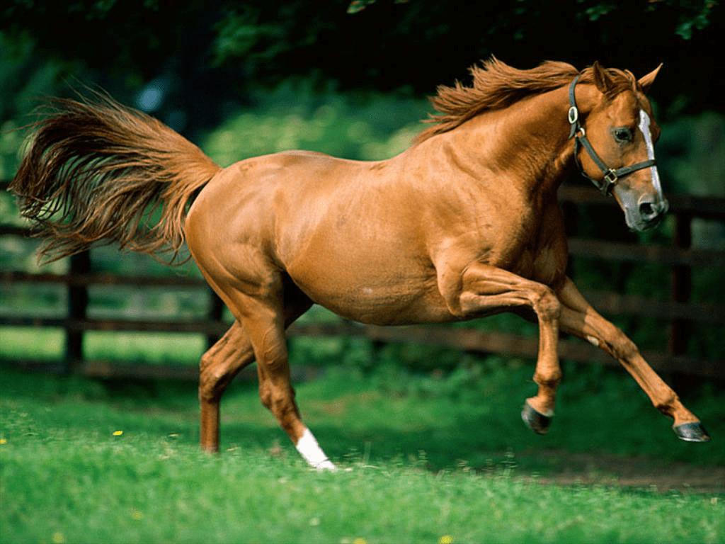 حصان يدخل داخل سيارة صالون في دهوك