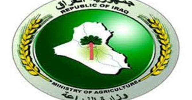 وزارة الزراعة: تعلق على تأثير السيول وتحدد موعد نقل بذور الحنطة والشعير
