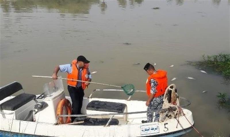 رصد أسماك نافقة في نهر الغراف بمحافظة ذي قار