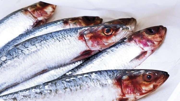 روسيا اكتشاف السمكة الأكثر فائدة للإنسان