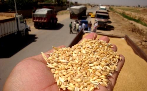 العراق :يعلن حاجته الى إستيراد كميات كبيرة من الحنطة