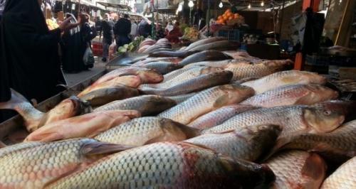 حكومة النجف تنهي حظر دخول الاسماك