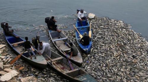 تفسير جديد لنفوق الأسماك في العراق