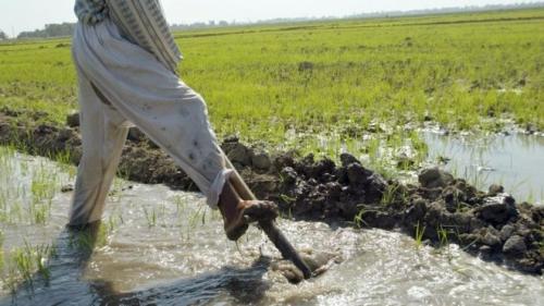 طلب نيابي لوزارتي الزراعة والموارد بتوسعة الخطة الزراعية