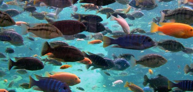سكان جزيرة يستيقظون على شاطئ مليء بالأسماك!