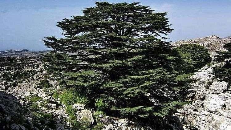 التغير المناخي يهدد رمز لبنان بالدمار!