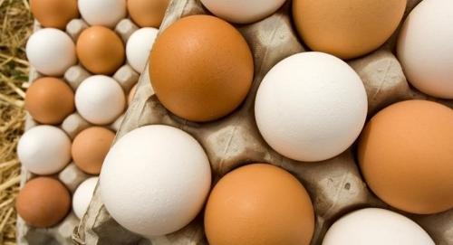 إنتاج بيض دجاج هو الأول من نوعه في العالم