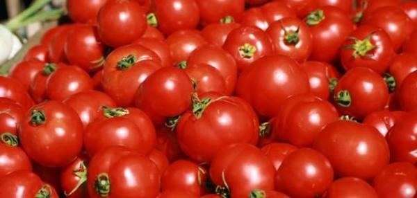 وزير الزراعة يطمئن الشعب على الطماطم العراقية