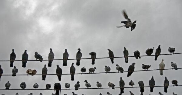 طائر يقتل شخصين داخل مستشفى