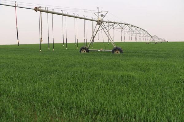 وزارة الزراعة تعلن خلاصة الخطة الشتوية المقرة للموسم 2018 -2019