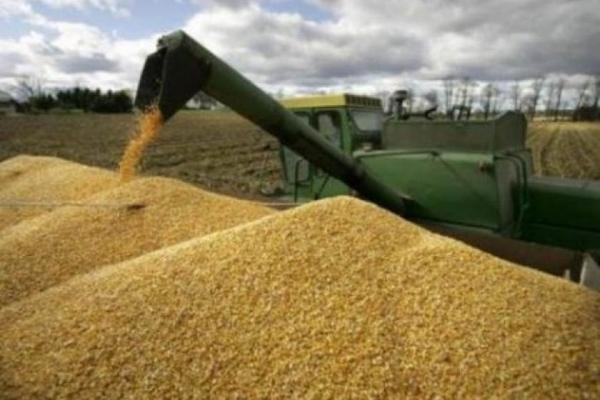 تشكيل غرفة عمليات استعدادا لتسويق محصول الحنطة والشعير في الديوانية