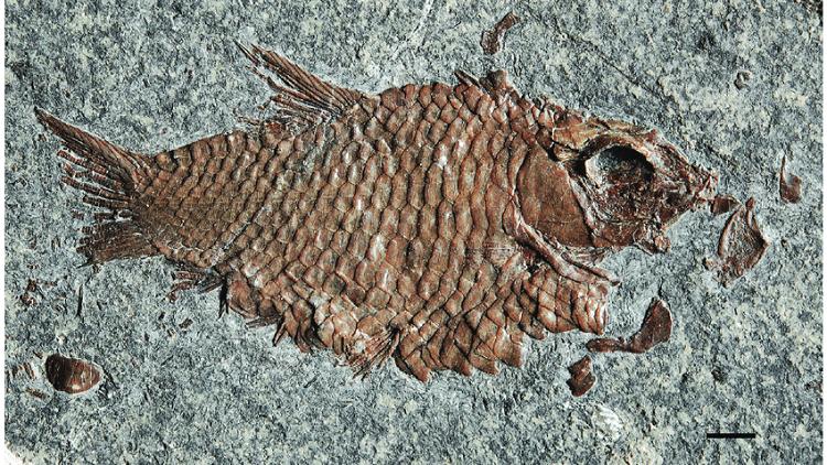 اكتشاف أنواع جديدة من الأسماك في جبال الألب السويسرية