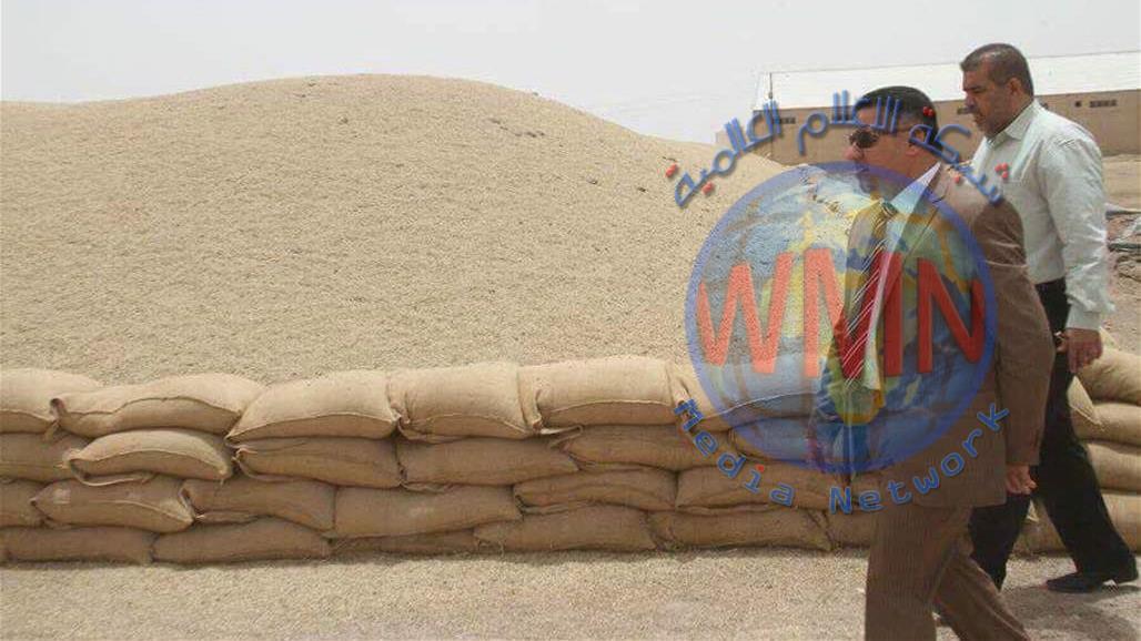 ذي قار تعلن ارتفاع نسب تسويق الحنطة في المحافظة