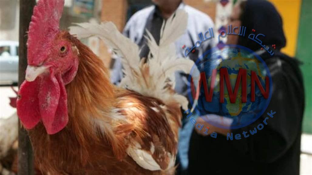 البيطرة تعلن اصابة شخص بمرض انفلونزا الطيور بالبصرة
