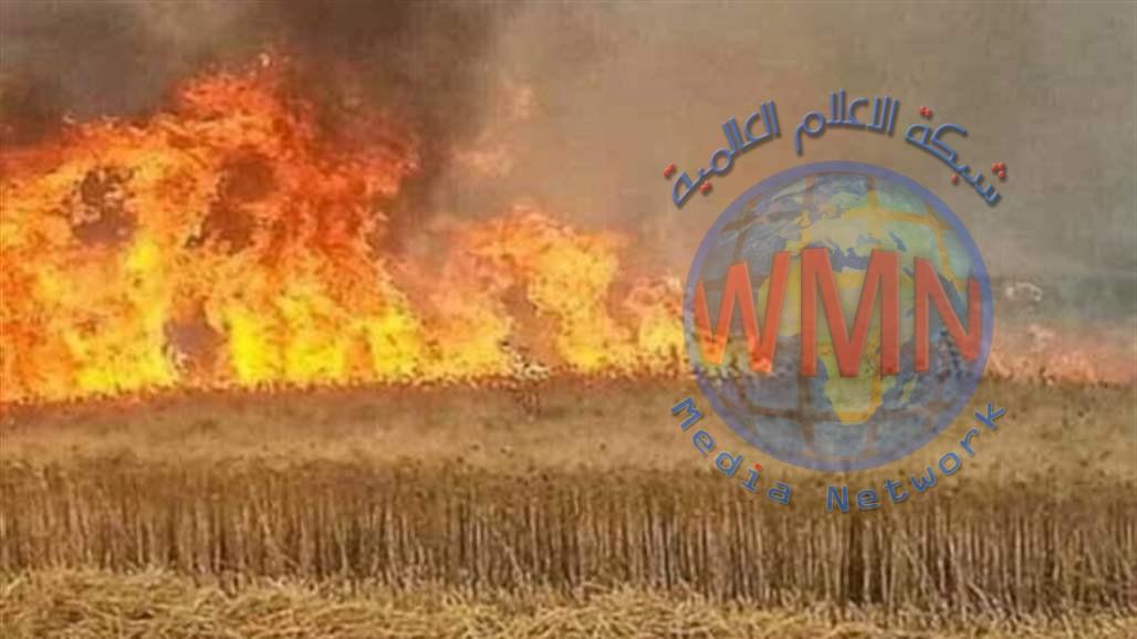 ابو رغيف: بعثيون وعناصر بداعش نفذوا عمليات حرق المحاصيل لاخذ اتاوات
