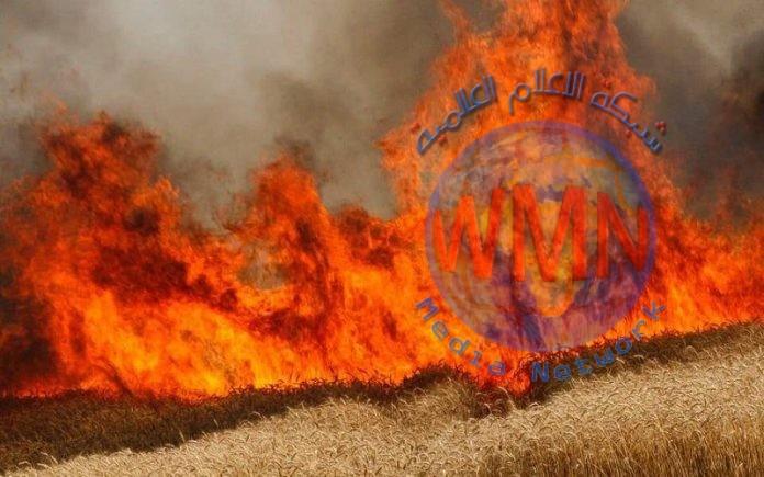 الدفاع المدني يكشف عن آخر احصائية بحرائق مزارع الحنطة