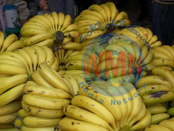 اختبار تطبيق إلكتروني لحماية محصول الموز