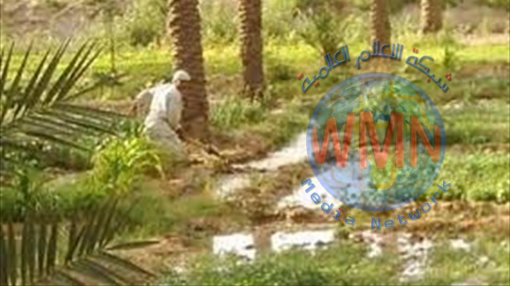 وزارة الزراعة: منع الاستيراد اعاد اربعة الاف مزارع لمزاولة عملهم في ديالى