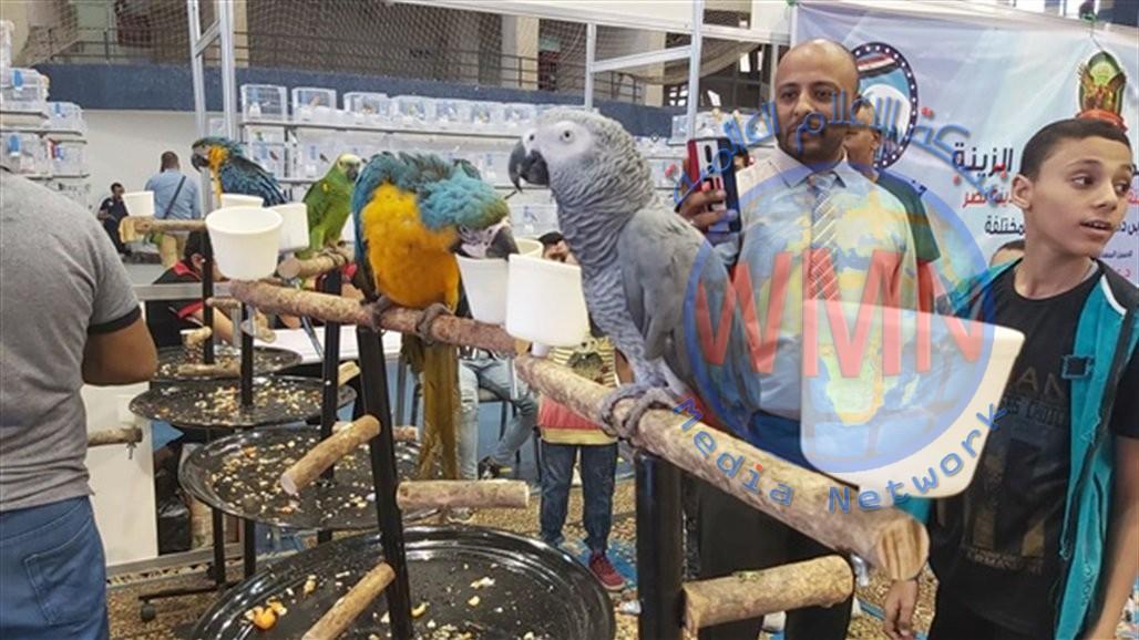 800 طائر حب يتنافسون على الأجمل في مصر