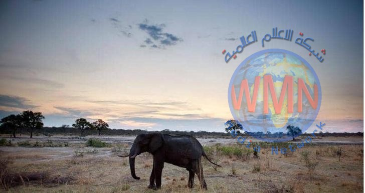 زيمبابوي تنقل مئات الافيال والحيوانات لاجتياح الجفاف اجوائها