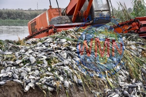 وزارةالزراعة تعلن موعد إنتهاء مرض الأسماك وتطمئن المواطنين