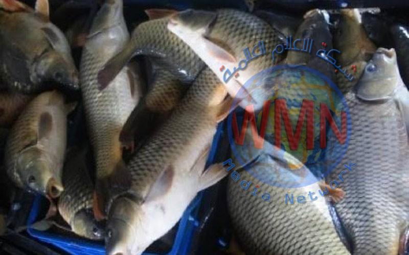 وزراة الزراعة تعلن تحقيق العراق الاكتفاء الذاتي من الأسماك واستعداها لمنح الموافقات للتصدير