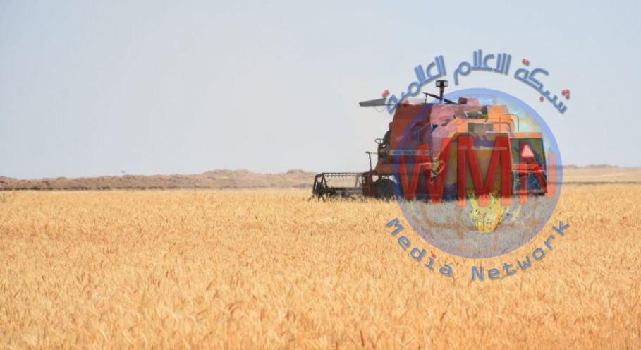 الأنبار: قرب تحقيق الاكتفاء الذاتي بمحصول الحنطة