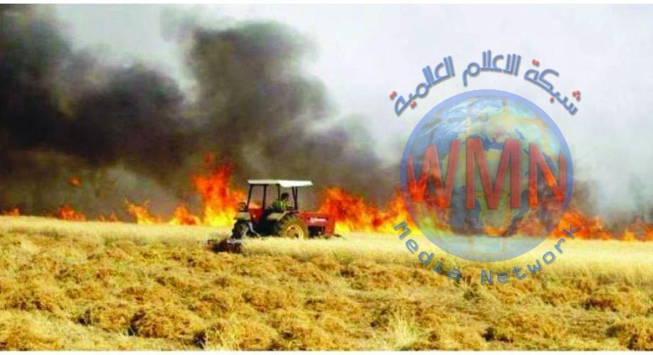 وزارة الزراعة: ثلاثة أسباب وراء حرائق الحنطة