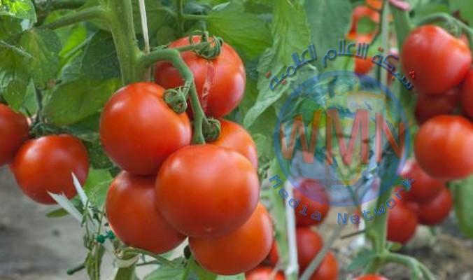 الزراعة تنفي الاتفاق مع الجانب اللبناني على استيراد محاصيل زراعية متوفرة محلياً