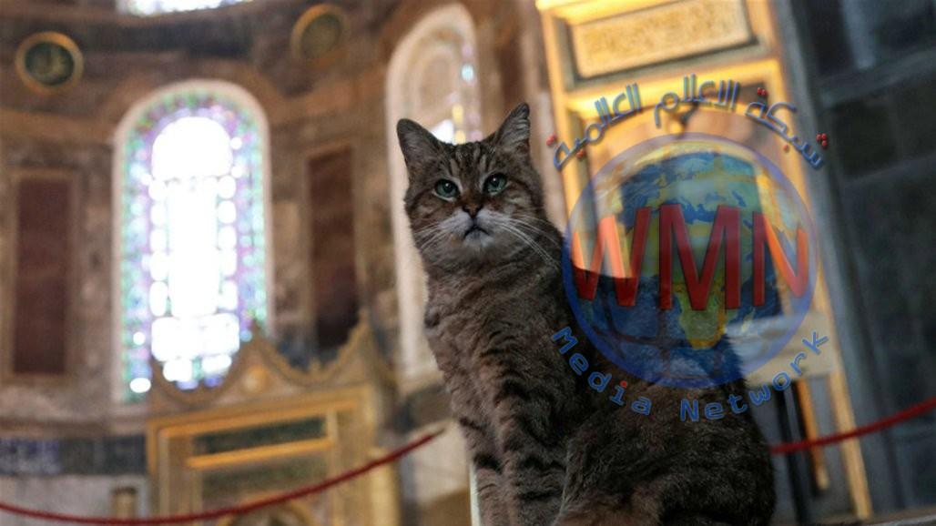 قطة آيا صوفيا تودّع الشهرة بعد معاناتها مع المرض!