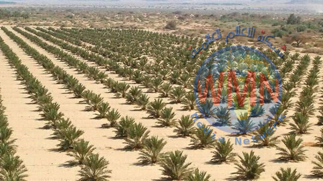 الزراعة النيابية: نسعى لتشريع قانون خاص بتمليك الاراضي الصحراوية