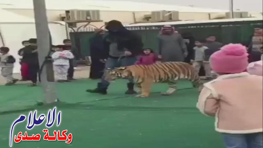 بالفديو نمر يهجم على طفلة سعودية في سكاكا