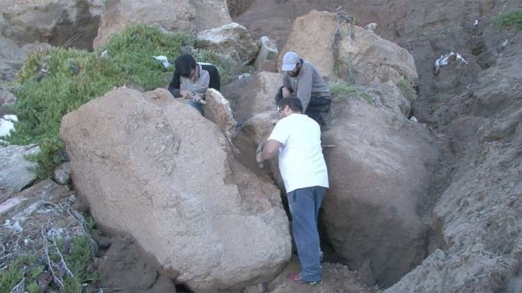 """اكتشاف بقايا """"حيوان كسول"""" عملاق عمرها 3 ملايين سنة"""