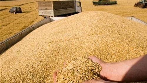 العراق يطرح مناقصة لشراء 50 ألف طن من الحنطة