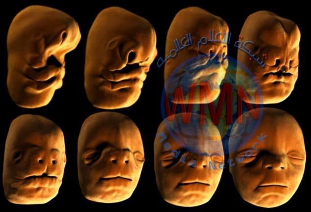 علماء يكشفون سبب قدرة وجه الإنسان على التعبير عن مشاعر عدة