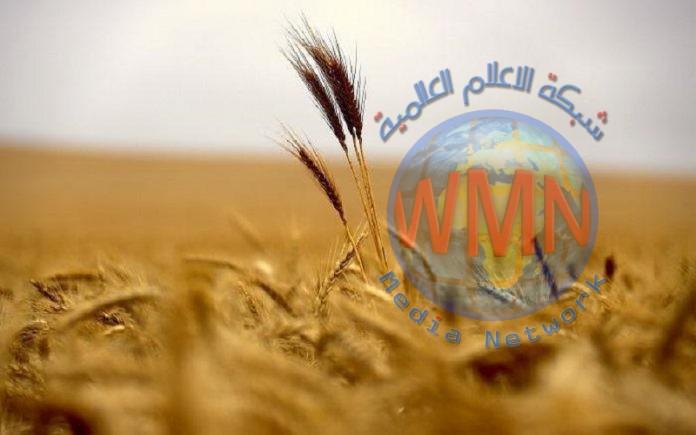 الرديني: واسط سلة العراق الغذائية وهذا ما تنتجه من الحنطة والشعير