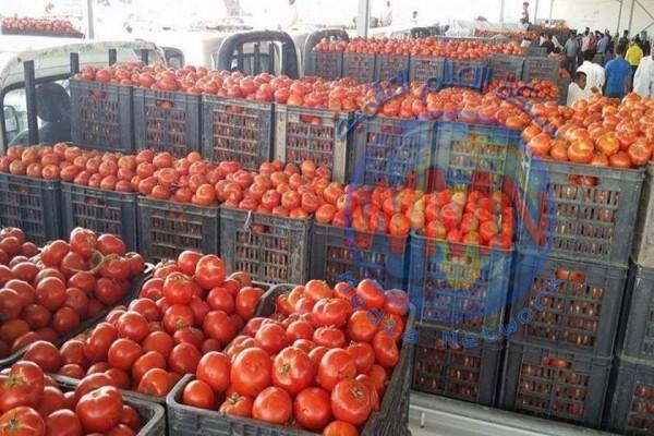 الزراعة تفتح أستيراد محصول الطماطة وبكميات مقننة