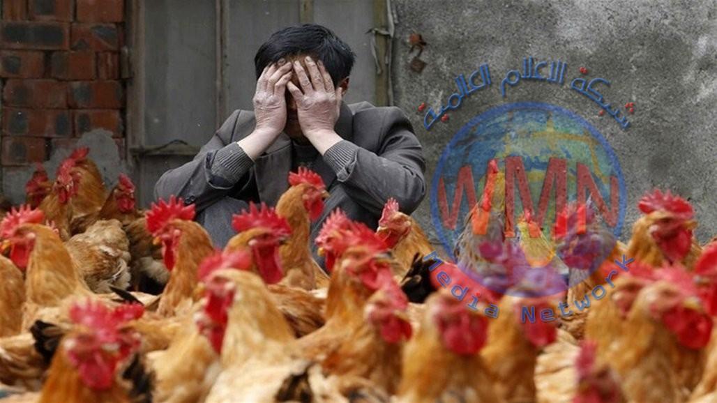 """بعد """"كورونا"""".. فيروس إنفلونزا الطيور يتفشى مجددا في الصين"""