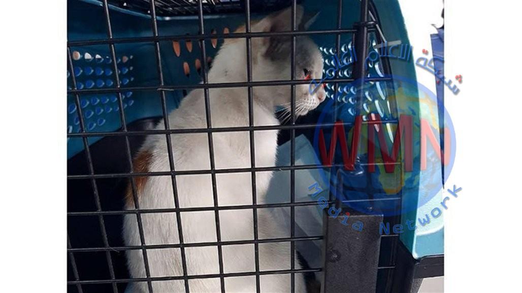 """القبض على """"قط"""" يهرب المخدرات إلى أحد سجون بنما"""